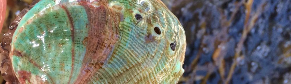 abalone header