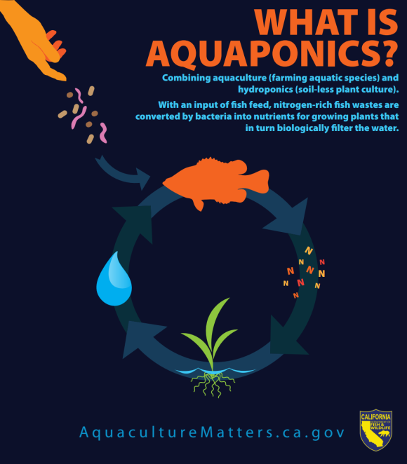 Combining aquaculture (farming aquatic species) and hydroponics (soil-less plant culture). With an input of fish feed, nitrogen-rich fish wastes are converted by bacteria into nutrients for growing plants that in turn biologically filter the water.