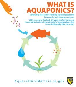 9. Aquaponics Infographic_white backgroundjpg_Page1