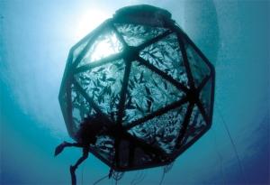 Finfish Aquaculture