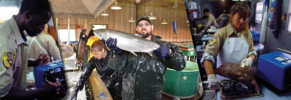 Aquaculture job posting photo banner